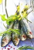 Herrings with herbs