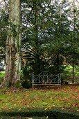 Garden seat beside tree in autumnal garden