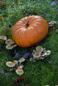 Pumpkin and mushrooms in grass
