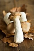 Fresh king oyster mushrooms on autumn leaves