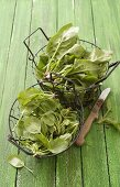 Fresh spinach in wire baskets on green painted wooden background