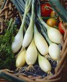 White onions, variety 'Trebons'