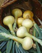 White onions, variety 'Mulhouse'