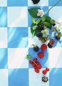 Fresh blackberries, raspberries and redcurrants