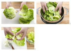 Separating a lettuce into leaves and tearing up the leaves
