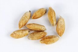 Grains of wheat and rye