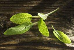 Sage on wooden background