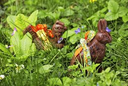 Chocolate bunny & chocolate hen among spring flowers & grass