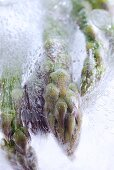 Frozen green asparagus (close-up)