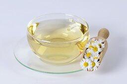 Daisy tea (Bellis perennis)