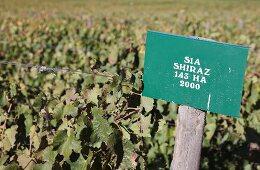 A vineyard and sign denoting the grape variety Shiraz