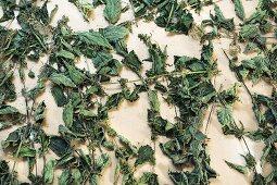 Getrocknete Brennessel (Urtica dioica) Biodynamisches Präparat