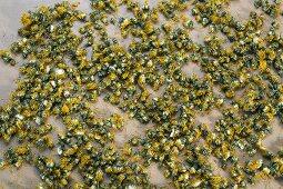 Getrocknete Löwenzahnblüten (Taraxacum officiale), wird im biodynamischen Rebbau angewendet