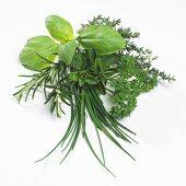 Varieties of herbs for cooking
