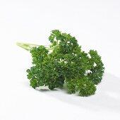 Curly leafed parsley (Petroselinum crispum)
