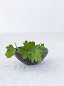 Fresh parsley in a bowl