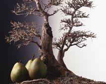 Three pears next to a Bonsai tree