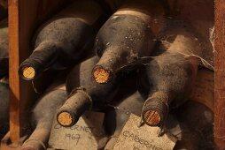 Wine cellar museum (Kanonkop, Stellenbosch, Western Cape, SA)