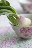 A tulip bulb in a cup