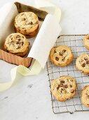 Chameleon cookies
