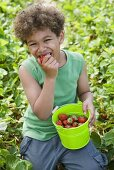 A little boy eating strawberries in a strawberry field