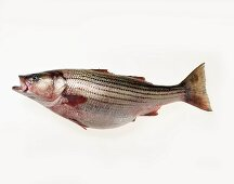 A Whole Uncooked Sea Bass