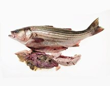 A Whole Uncooked Gutted Sea Bass
