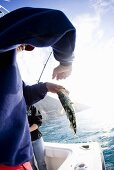 Man in Boat with Sea Bass; Deep Sea Fishing