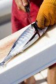 Man Filleting Fish on Deep Sea Fishing Boat