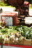 Organic Spring Onions on Tractor at Farmers Market