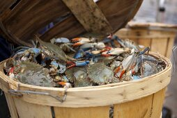 Basket of Fresh Blue Crab
