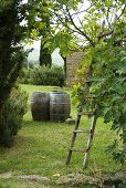 Wooden barrels in a garden and a ladder leaning against a tree