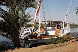 Passengers on the sundeck of a ferry on the river bank in front of a palm tree on the the River Nile, Egypt