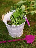A white metal bucket with a green plant and bright pink fly swat