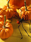 Orange pumpkins and a spider