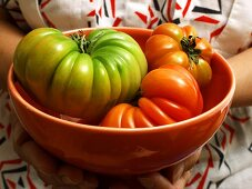 Holding Tomatoes in a Bowl