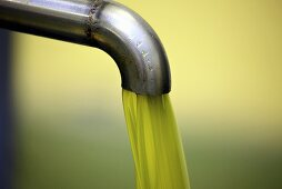 Fresh, cold-pressed olive oil, Perugia, Umbria, Italy