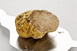 White truffle mushroom and a truffle slicer