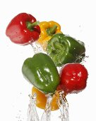 Colourful peppers being washed