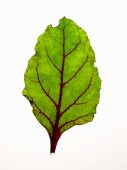 Young beetroot leaf