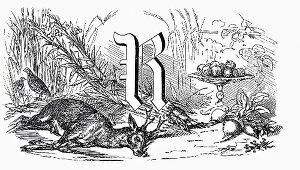 Still life with letter R, roe & root vegetables (Illustration)