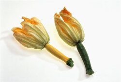 Young courgettes with flowers