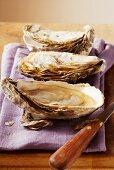 Fresh oysters on purple cloth