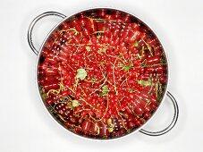Redcurrants in a colander