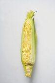 Corn cob with husks