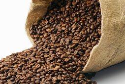 Spilt jute sack full of coffee beans