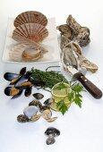 Assorted fresh shellfish