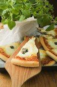 Several slices of American-style three cheese pizza, oregano
