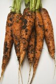 Fresh carrots with soil