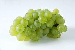 Green grapes, variety Weisser Elbling